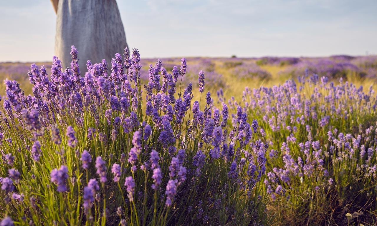 healthscout-therapieform-aromatherapie